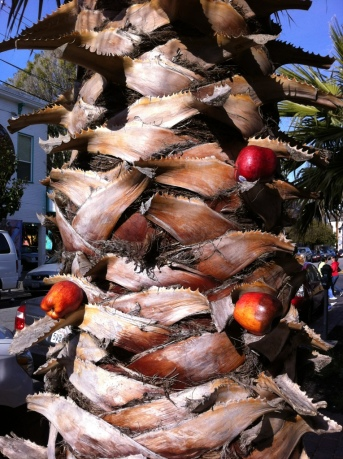 Apples on palm tree trunk