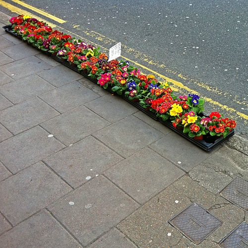 Row of potted flowers on edge of sidewalk
