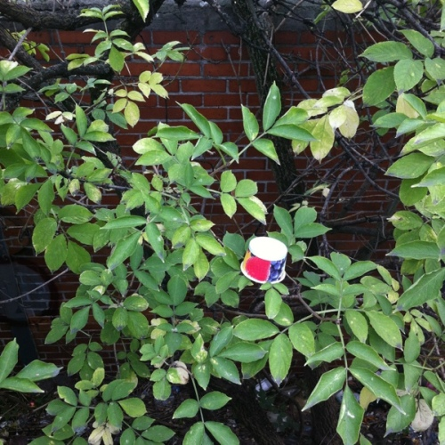 Ice cream cup in tree