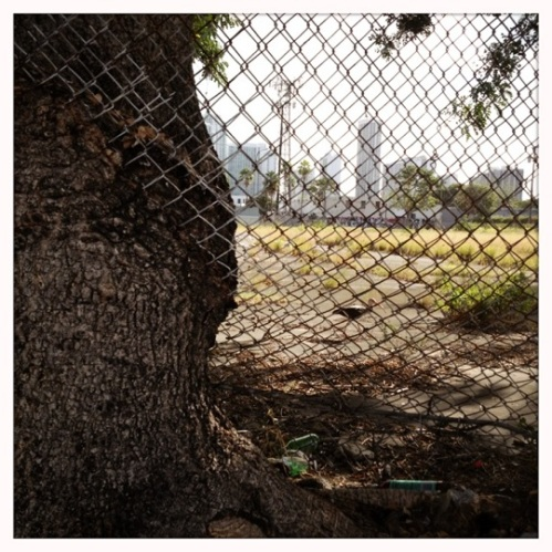 tree trunk growing through chain link fence