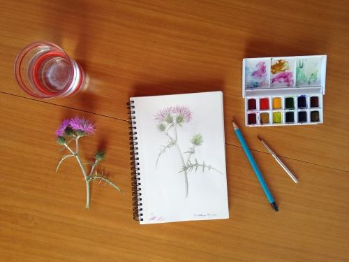 Artist's worktable with thistles, sketch of thistles, watercolors and pencil